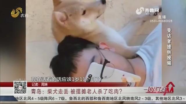 青岛:柴犬走丢 被摆摊老人杀了吃肉?