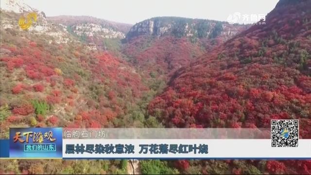 临朐石门坊:层林尽染秋意浓 万花落尽红叶烧