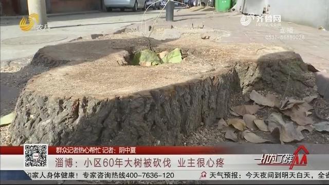 【群众记者热心帮忙】淄博:小区60年大树被砍伐业主很心疼