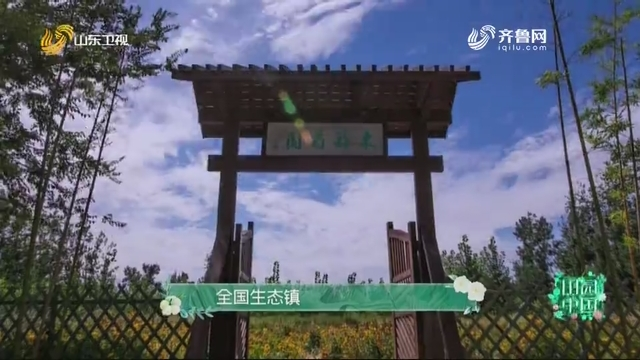 20201025《田园中国》:山东省昌邑市柳疃镇青阜村