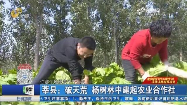 莘县:破天荒 杨树林中建起农业合作社