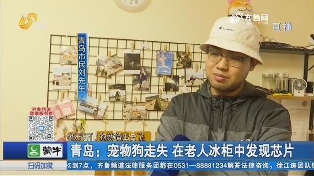 青岛:宠物狗走失 在老人冰柜中发现芯片