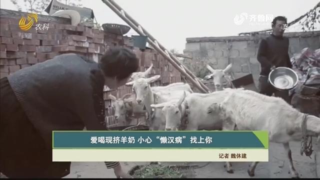 """【齐鲁畜牧】爱喝现挤羊奶 小心""""懒汉病""""找上你"""