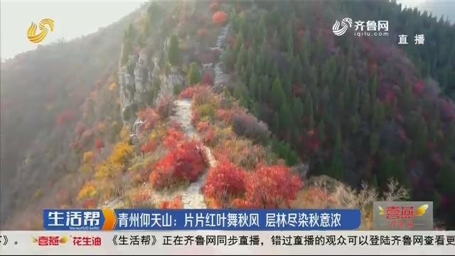 青州仰天山:片片红叶舞秋风 层林尽染秋意浓
