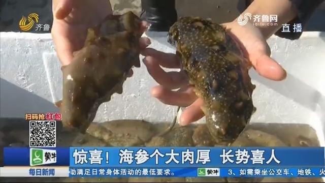 青岛:野生海参捕捞忙