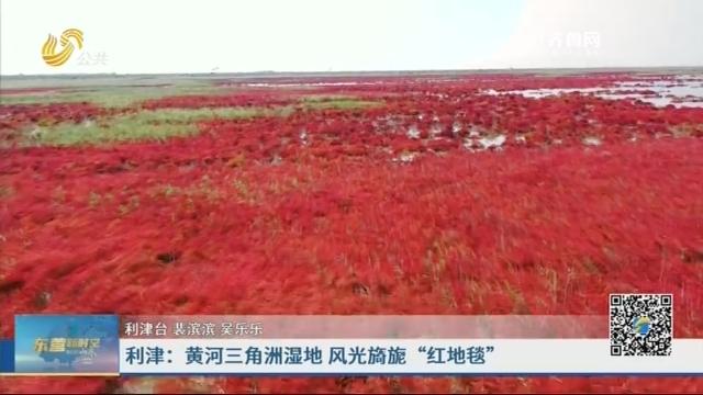 """利津:黄河三角洲湿地 风光旖旎""""红地毯"""""""