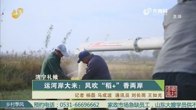"""【济宁礼飨】运河岸大米:风吹""""稻+""""香两岸"""