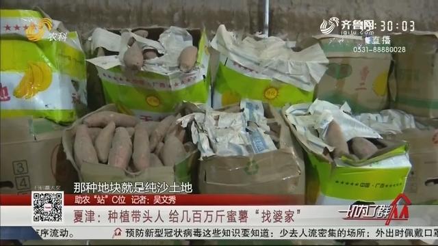 """【助农""""站""""C位】夏津:种植带头人给几百万斤蜜薯""""找婆家"""""""