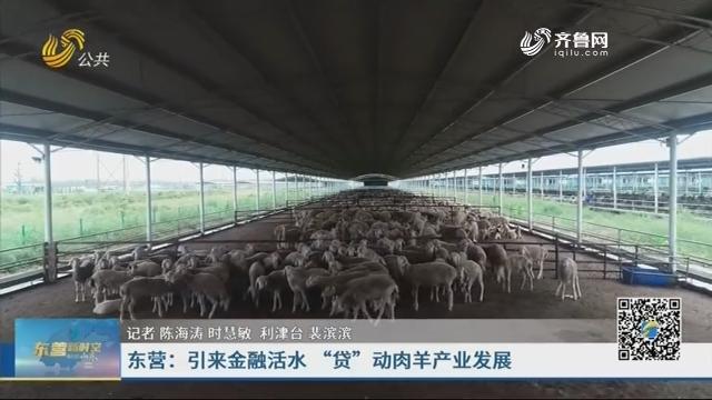 """东营:引来金融活水 """"贷""""动肉羊产业发展"""