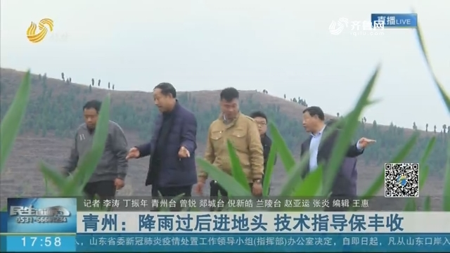 青州:降雨过后进地头 技术指导保丰收