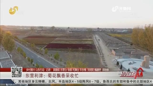 【乡村振兴 山东行动】东营利津:菊花飘香采收忙