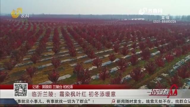 临沂兰陵:霜染枫叶红 初冬添暖意