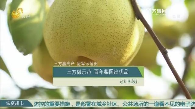 【三方赢高产 冠军示范田】三方做示范 百年梨园出优品
