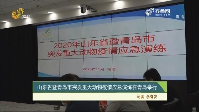 【齐鲁畜牧】山东省暨青岛市突发重大动物疫情应急演练在青岛举行