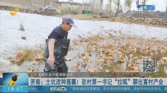 """济南:土坑改种莲藕!驻村第一书记""""拉呱""""聊出富村产业"""