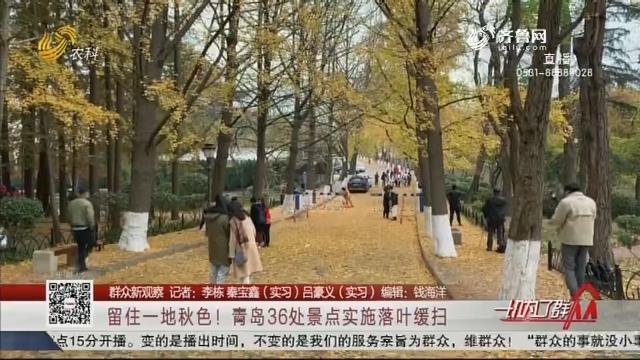 【群众新观察】留住一地秋色!青岛36处景点实施落叶缓扫