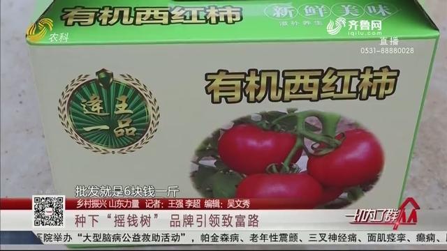"""【乡村振兴 山东力量】种下""""摇钱树"""" 品牌引领致富路"""