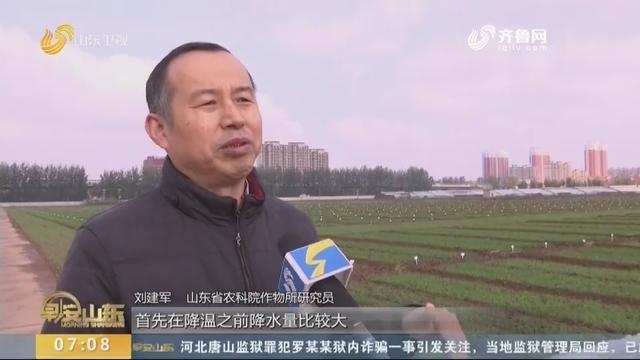 天气持续降温 专家表示低温不影响小麦生长