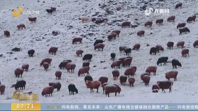 """绵延数公里!航拍新疆木乃县17万头牲畜""""冬季转场""""之旅"""
