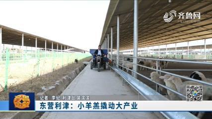 东营利津:小羊羔撬动大产业《齐鲁金融》20201125播出