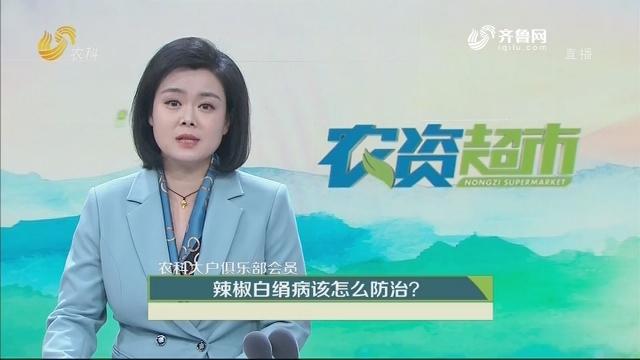 【农科大户俱乐部会员】辣椒白绢病该怎么防治?