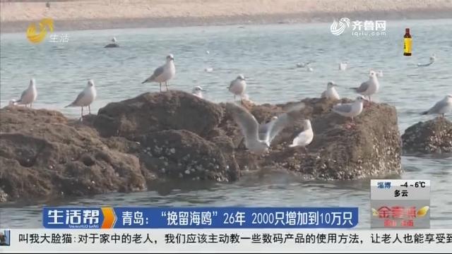 """青岛:""""挽留海鸥""""26年 2000只增加到10万只"""