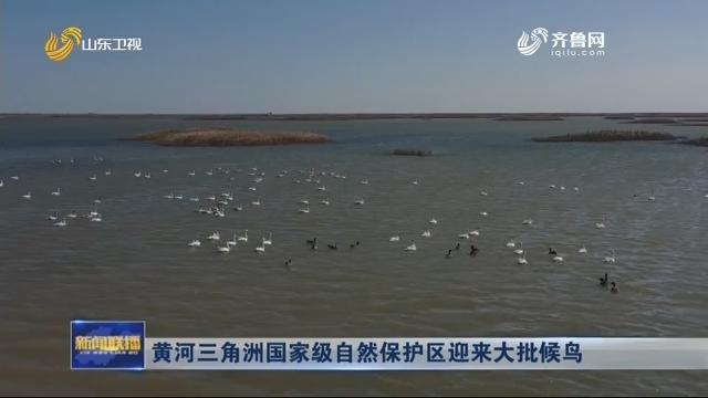 黄河三角洲国家级自然庇护区迎来大批候鸟