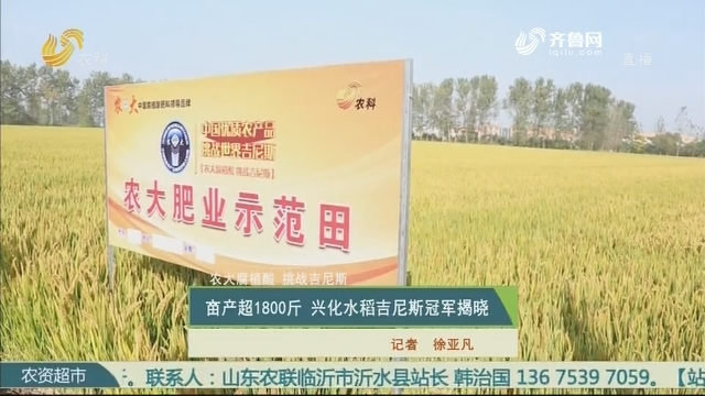 【农大腐植酸 挑战吉尼斯】亩产超1800斤 兴化水稻吉尼斯冠军揭晓