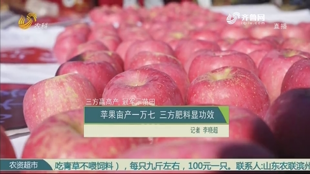 【三方赢高产 冠军示范田】苹果亩产一万七 三方肥料显功效