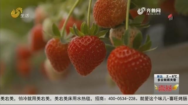 """龙角山村:小草莓""""牵出""""乡村大发展"""