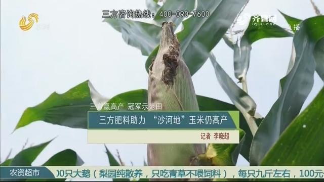 """【三方赢高产 冠军示范田】三方肥料助力 """"沙河地""""玉米仍高产"""