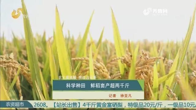 【农大腐植酸 挑战吉尼斯】科学种田 鲜稻亩产超两千斤