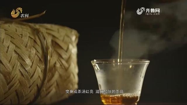 走进天府地标:雅安藏茶