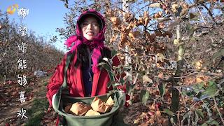 家乡好物——威海苹果 甜蜜诱惑