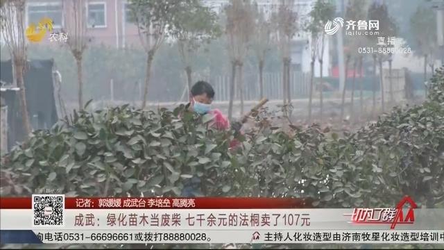 成武:绿化苗木当废柴 七千余元的法桐卖了107元