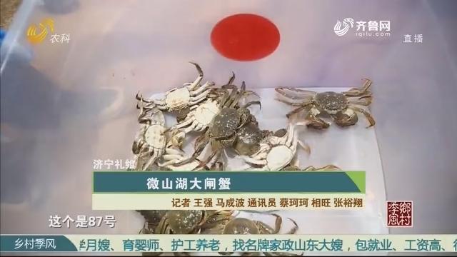 【济宁礼飨】微山湖大闸蟹