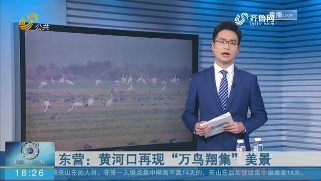"""东营:黄河口再现""""万鸟翔集""""美景"""