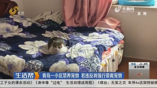 青岛一小区全面禁养宠物 若违反将强行带离宠物