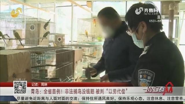 """青岛:全省首例!非法捕鸟没钱赔 被判""""以劳代偿"""""""