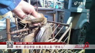 """【群众调查】青州:群众举报 大集上有人卖""""野味儿"""""""