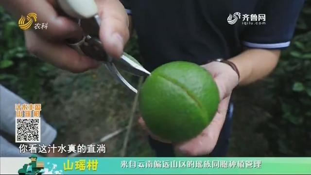 20201207《中国原产递》:山瑶柑