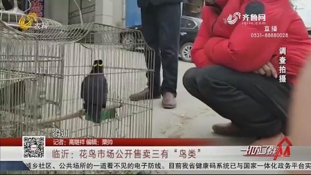 """临沂:花鸟市场公开售卖三有""""鸟类"""""""