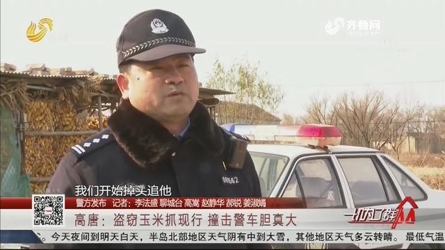 【警方发布】高唐:盗窃玉米抓现行 撞击警车胆真大