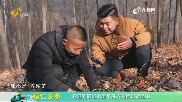 20201214《中国原产递》:桓仁龙参