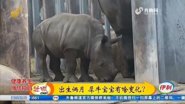 济南:为双角白犀牛宝宝征名