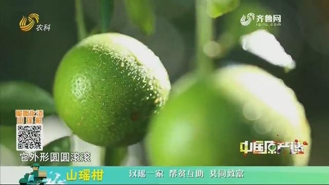 20201216《中国原产递》:山瑶柑