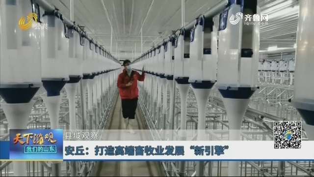 """【县域观察】安丘:打造高端畜牧业发展""""新引擎"""""""