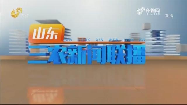 2020年12月19日山东三农新闻联播完整版