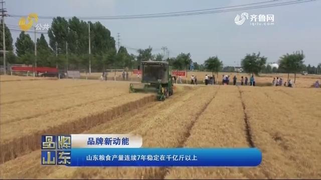 【品牌新动能】山东粮食产量连续7年稳定在千亿斤以上