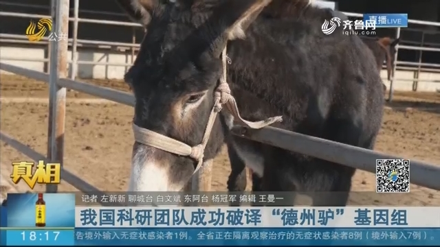 """【真相】我国科研团队成功破译""""德州驴""""基因组"""
